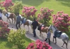 ballade en poney dans le parc pour les enfants